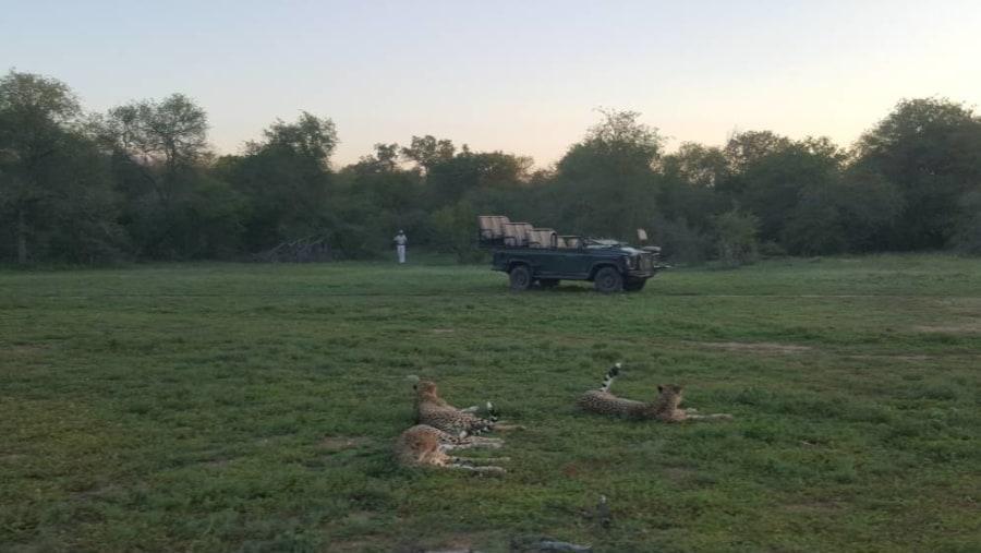 Walk with The Cheetah