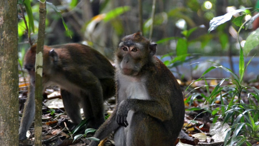 Monkeys in the Underground River National Park