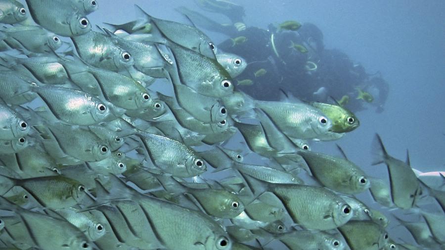 scuba dive Mozambique