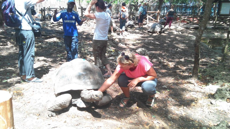 A massive male tortoise took his neck out after been scratched (who don't want to be loved?)