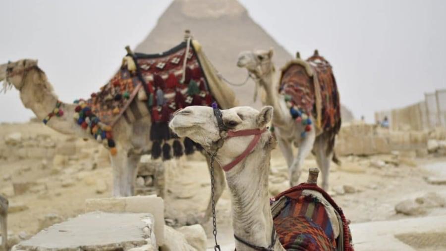 Cairo 1 day trip to pyramids
