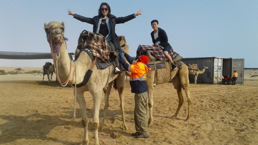 Camel rides into the dune belt