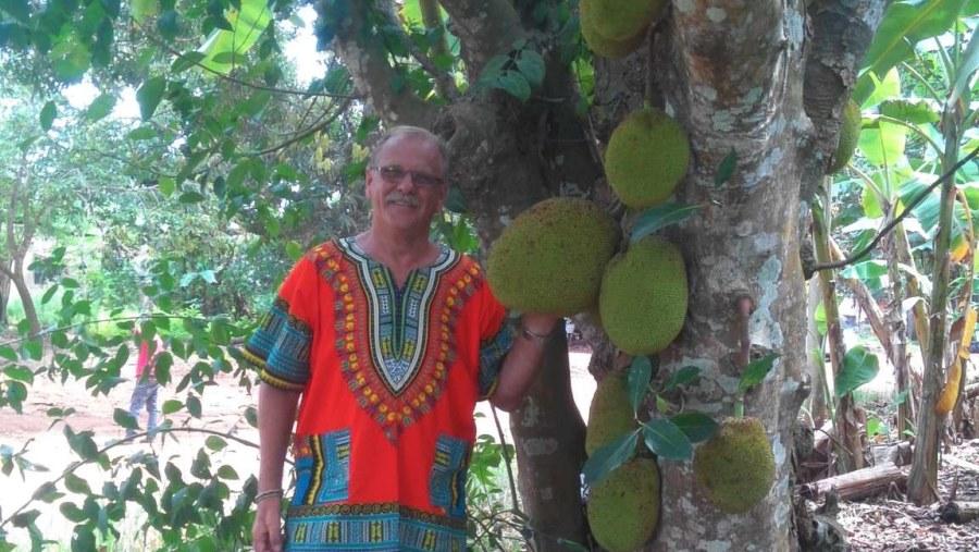 A huge jack fruit tree with plenty fruits on it.