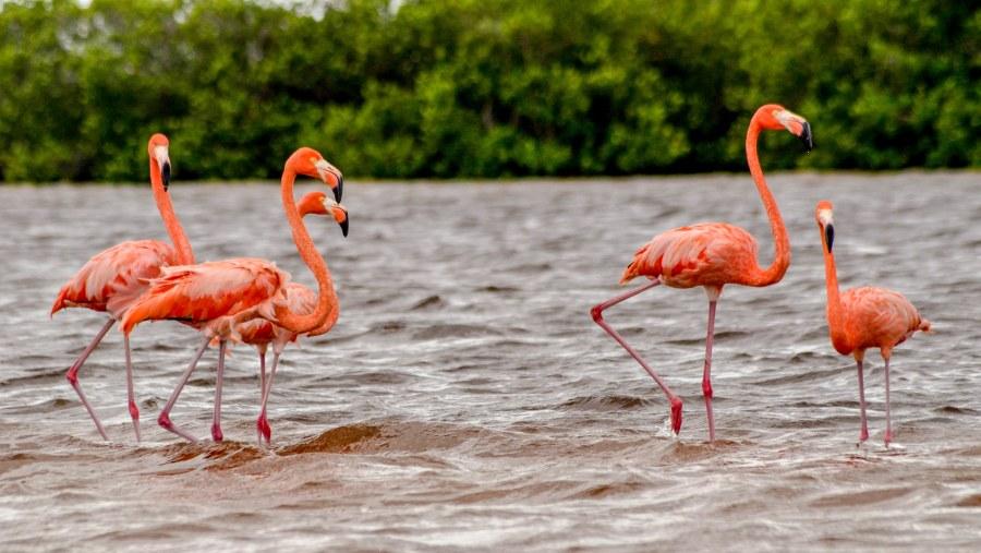 Flamingo-sighting tour