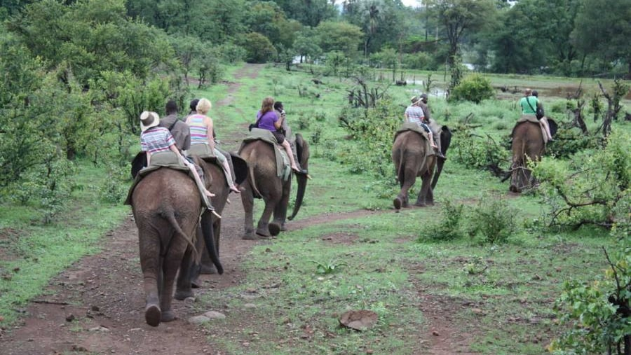 Elephant Backrides