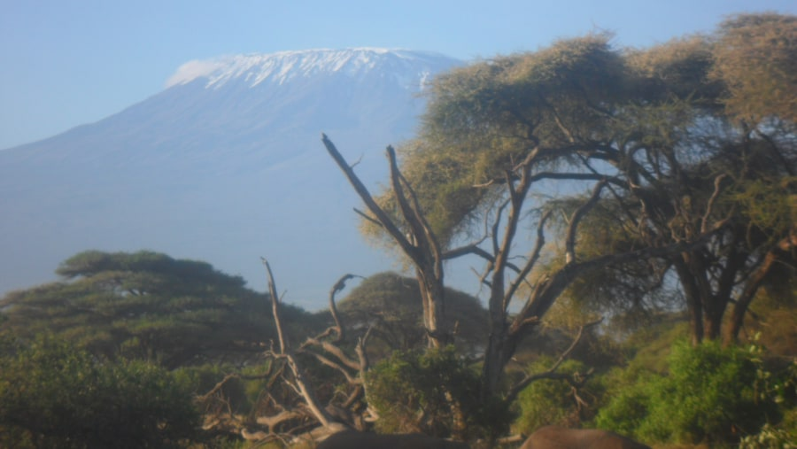 view of mt kilimanjaro