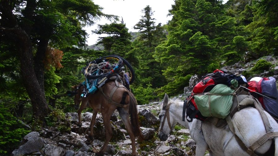Horses carrying luggage in Albanian Alps
