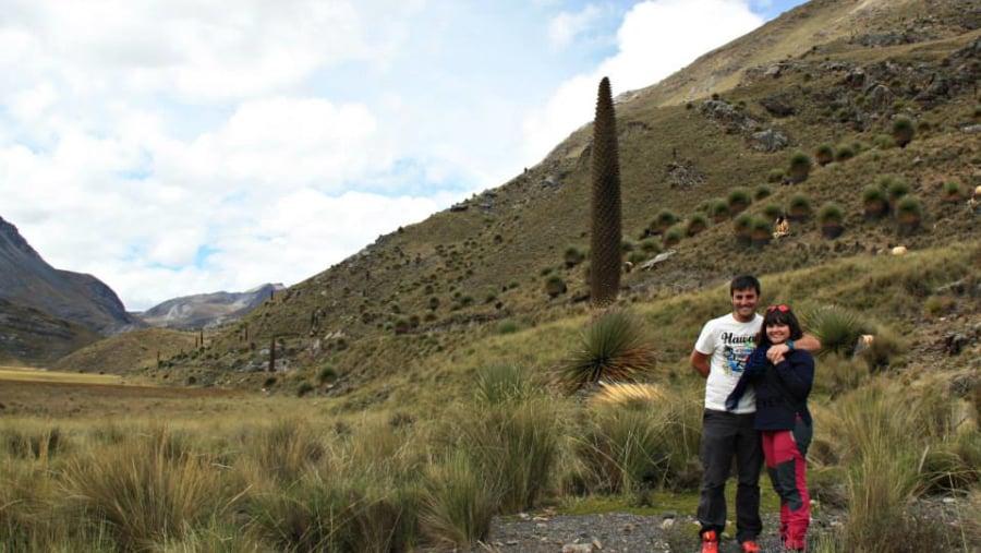 Puyas Raymondi, Cordillera Blanca