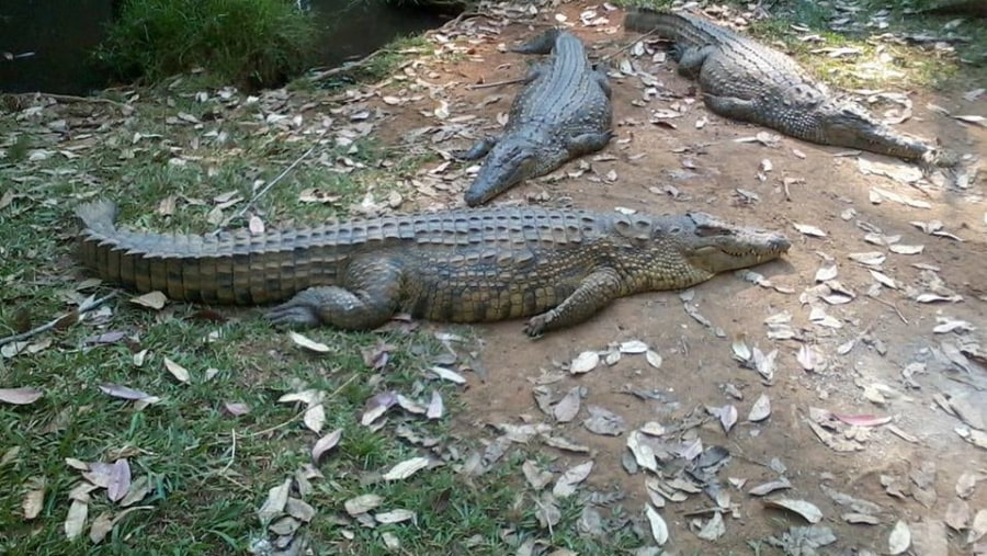Vakona Crocodile farm