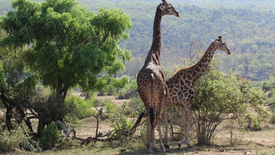 on safari with Alan Tours in the Kruger National Park