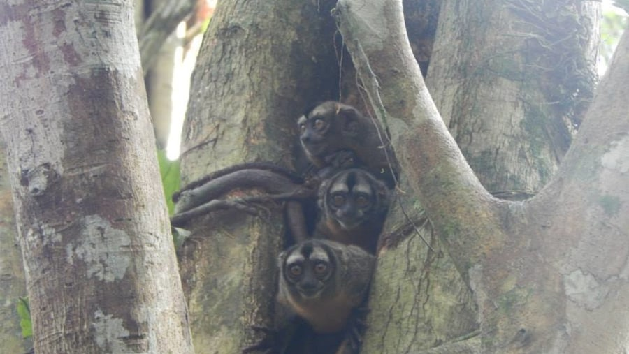 yarapa expeditions nocturnal monkey