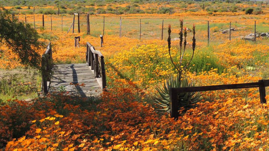 Spring Flower Display - Namaqua National Park