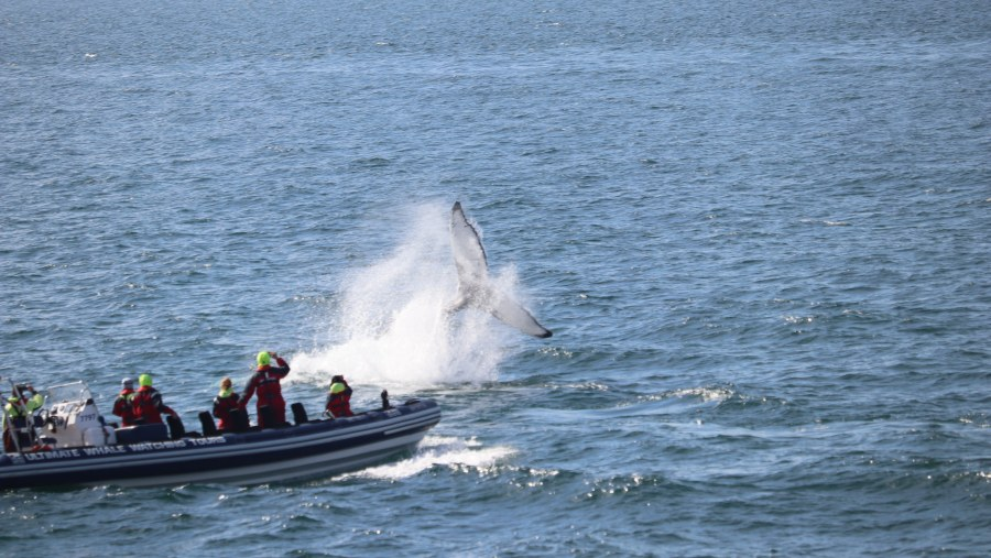 RIB Express Whale Watching