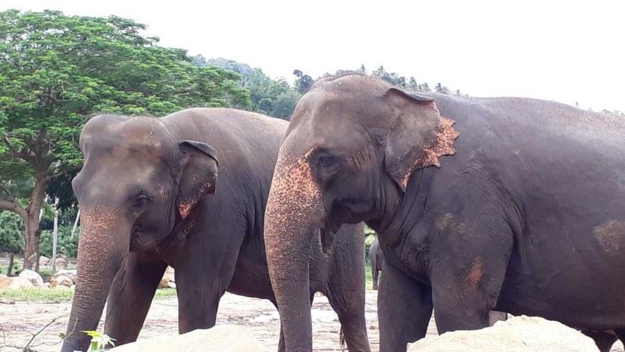 Elephant Orpharnage