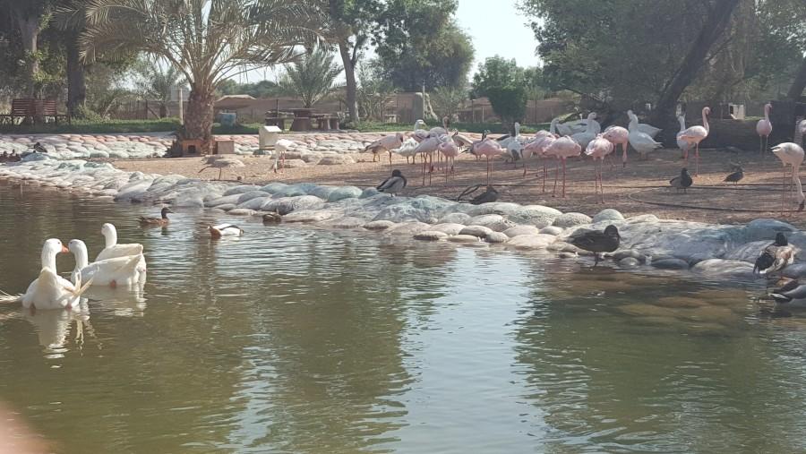 Al-Areen Park