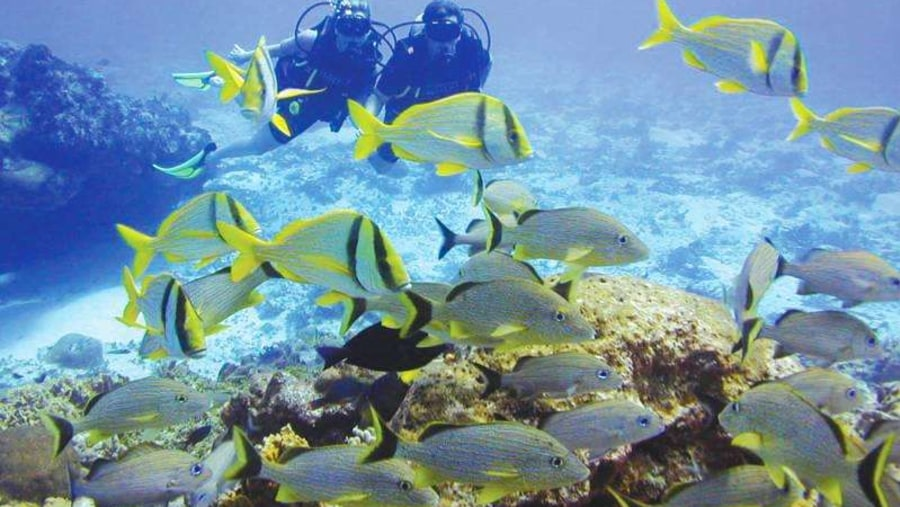 Red Sea - Diving & snorkeling