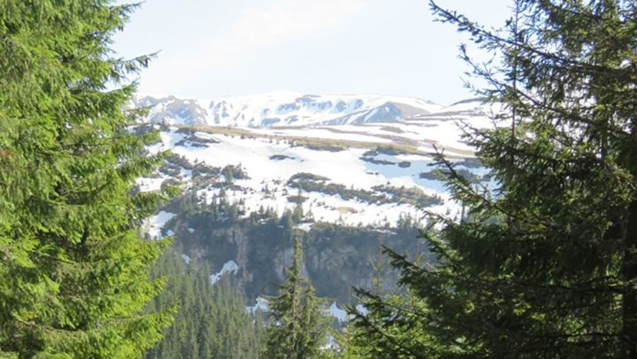 Mountain view in June