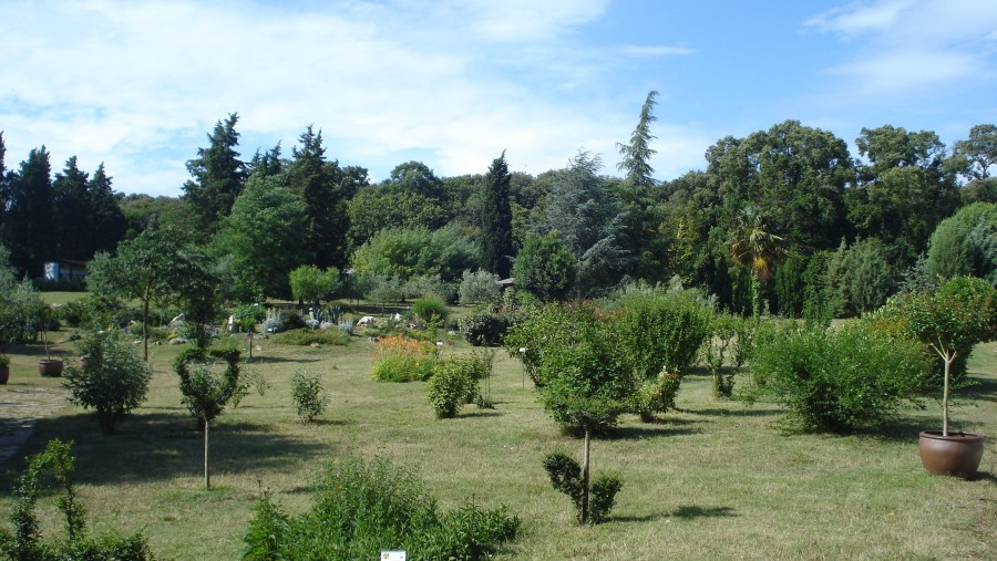 Botanical garden on Brijuni islands