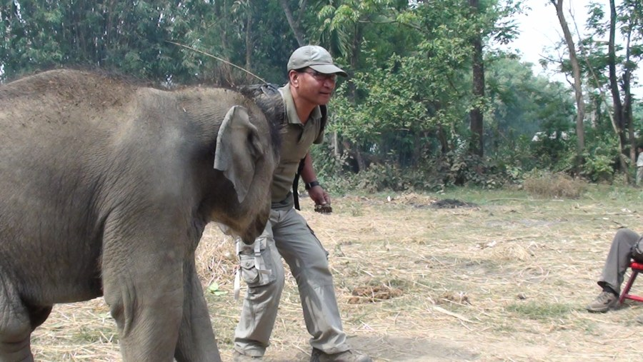 Playing with a baby Elephant