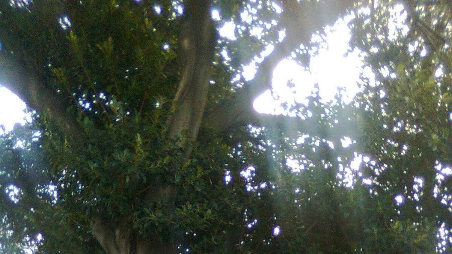 The Mendoubia gardens