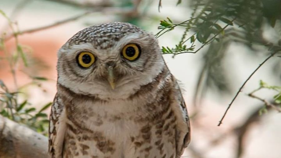 Owl resting at branch of tree