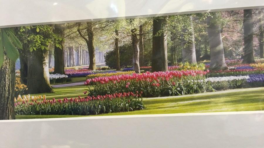 tulip park/parque tulipanes