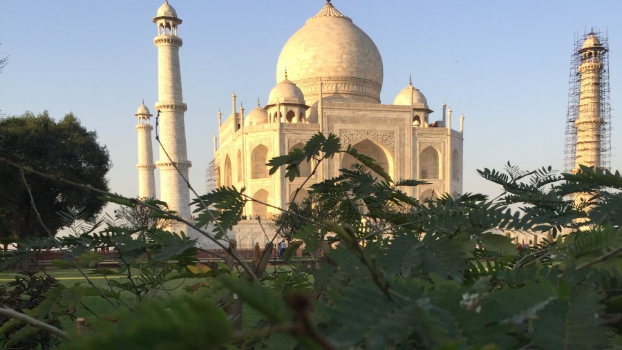 Taj Mahal from the exotic gardens