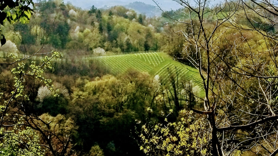 The land of white wine