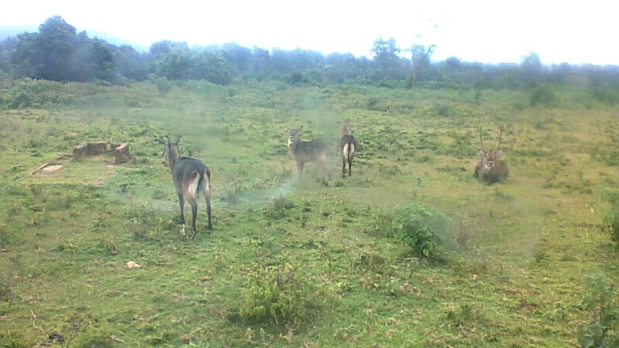 The Bushbucks in Aberdares