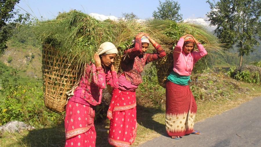 Women carrying fodder Grass