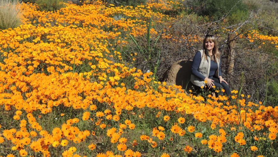 Springbok Spring Flower Display (Aug-Sep)