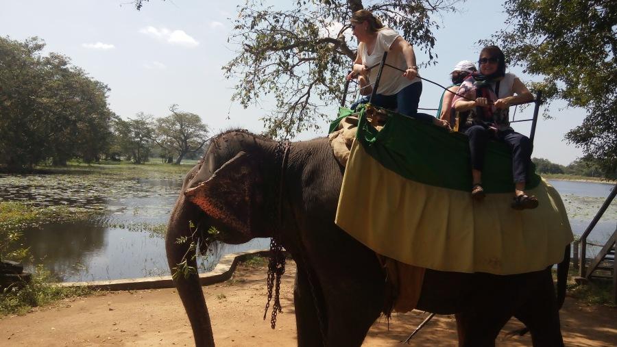 Elephant back safari with KLM 9 Holidays