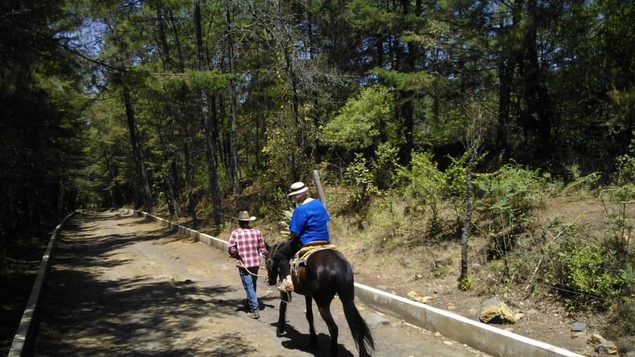 Horse back rides