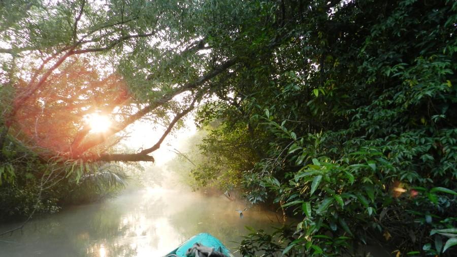 Nerrow canal of Sundarbans forest