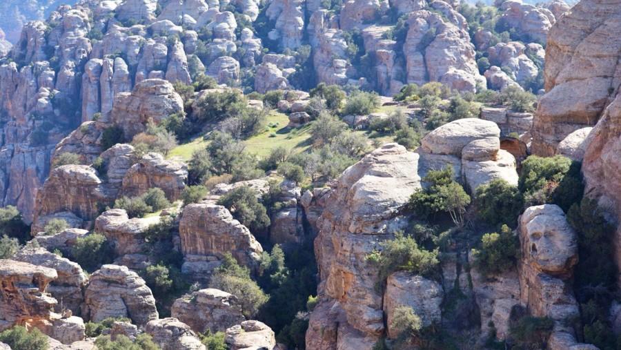 Dana Bio sphere reserve