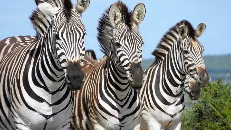 Addo Safaris, Alan Tours