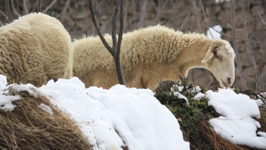 Imlil in winter