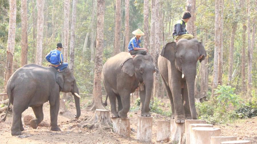 Nat pauk elephant camp