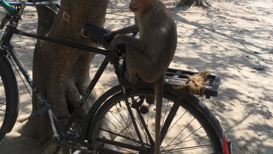 Spiritual sights, breathtaking views, and monkeys