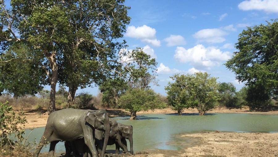 Excellent guide in Sri Lanka