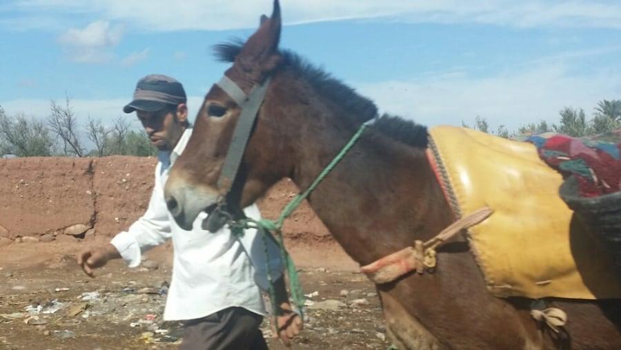 Morocco dream!