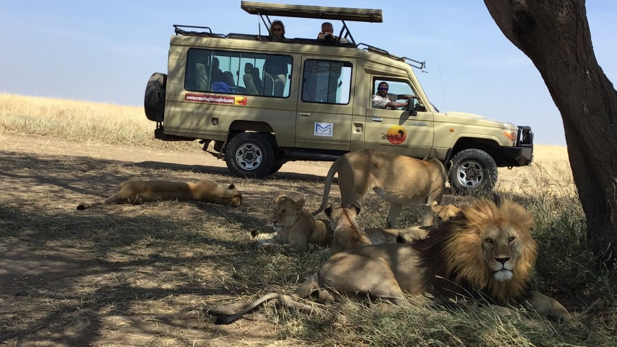 During game drive in Serengeti National Park