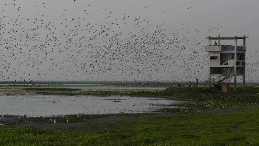 wetland of migratory birds