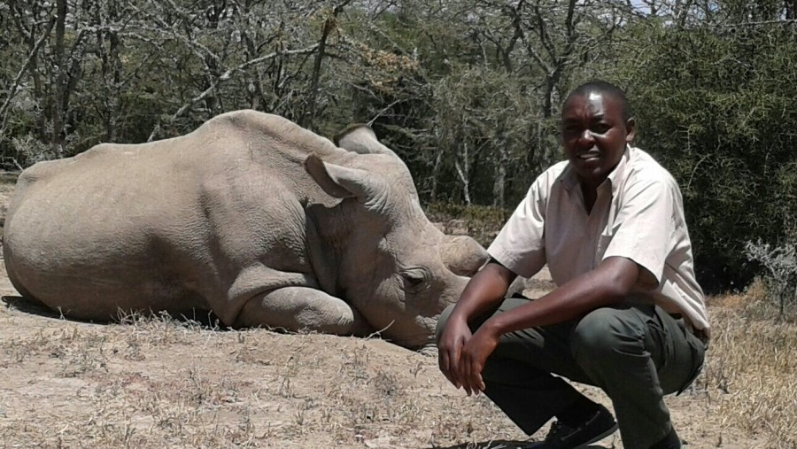 Saving the last Nothern white Rhino species