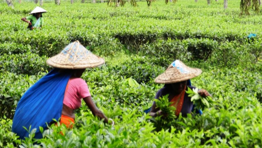 Tea workers at a Tea garden