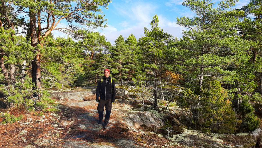 Archipelago forest