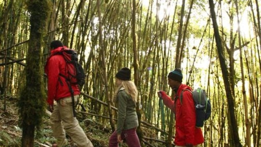 hiking in the Harenna Forest ,under one of the cloudy forest in ethiopia and the second largest forest for Country.