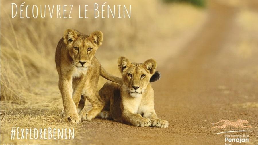 Discover Benin Safari, unique in West Africa !!!
