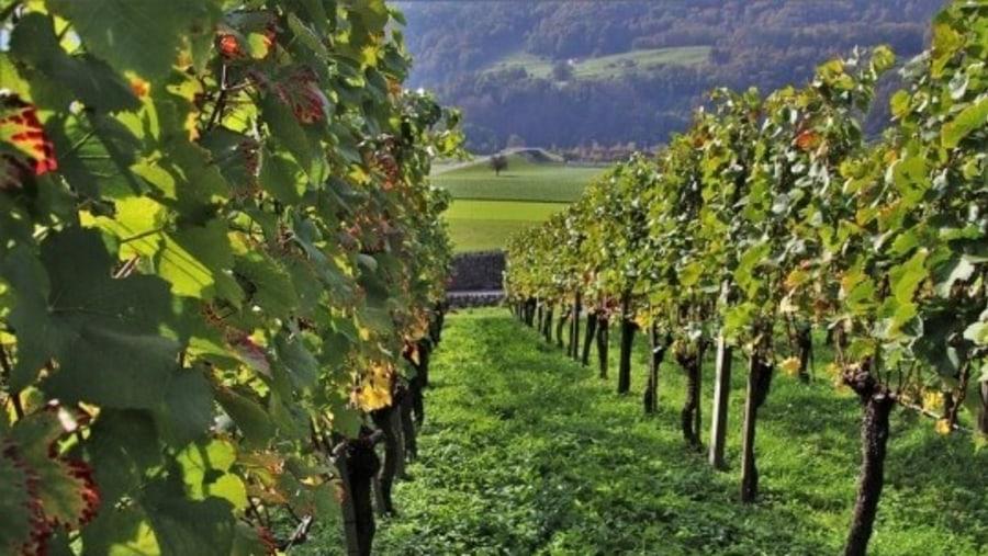 Constantia Wine Region