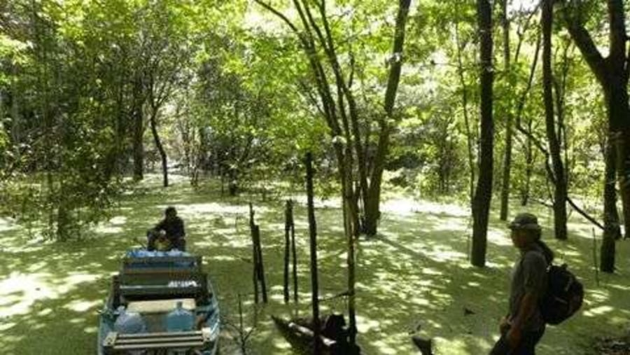 Canoeing in the flooded jungle coverd by this beautiful green aquatic carpet...
